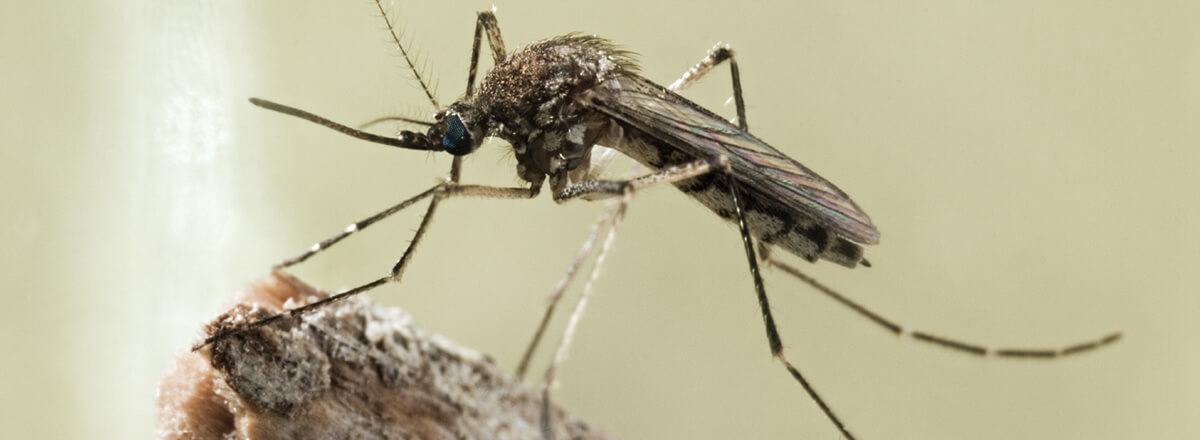 mosquito treatment in Greenwood